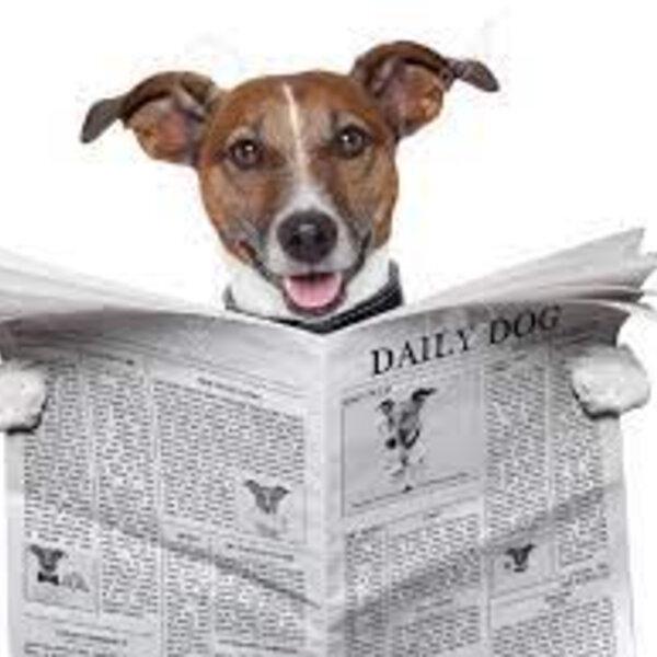 Meu cachorro só faz as necessidades na rua. Agora, com a volta do trabalho de forma presencial, é possível mudar esse hábito dele e ensiná-lo a fazer em casa?