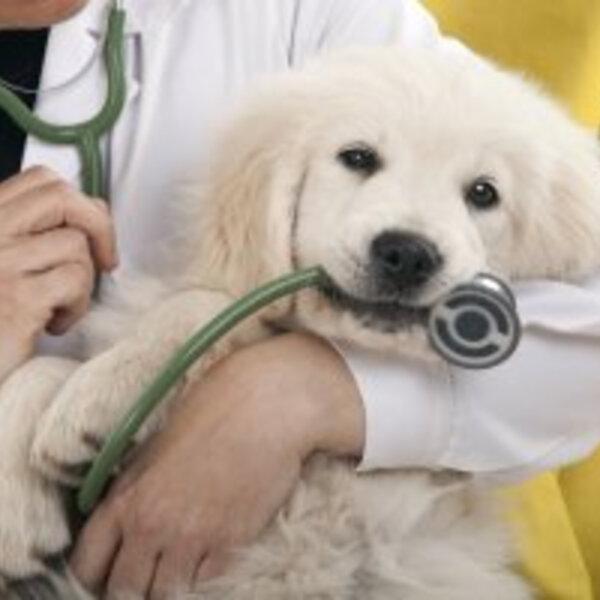 A importância de medicina veterinária comportamental