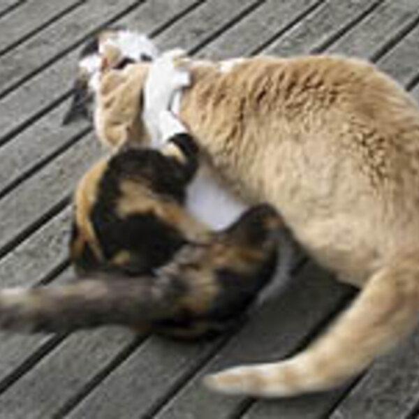 Feromônios melhoram a qualidade de vida de cães e gatos