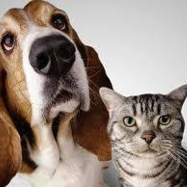 É possível ter uma amizade bacana entre cães e gatos