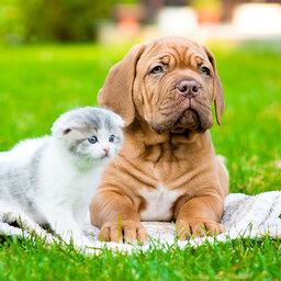 Apaixonados por cães e gatos?