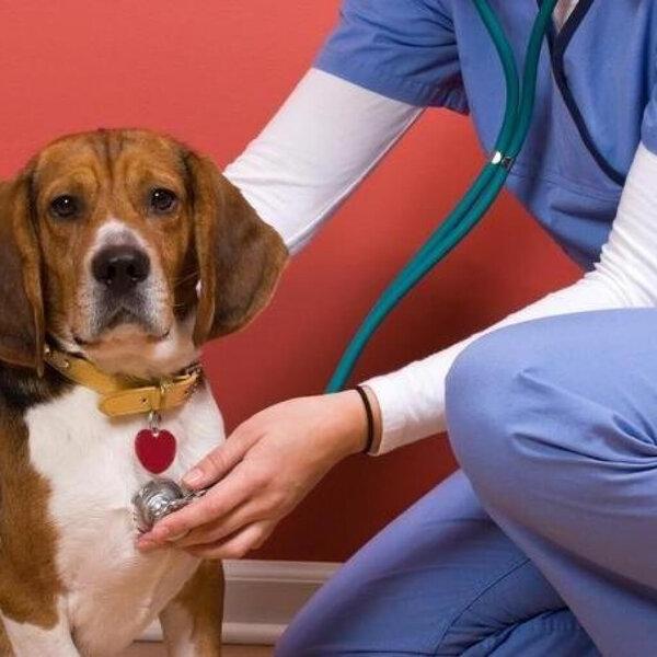 Hoje é Dia do Cardiologista. Você sabia que também existe Cardiologista Veterinário?