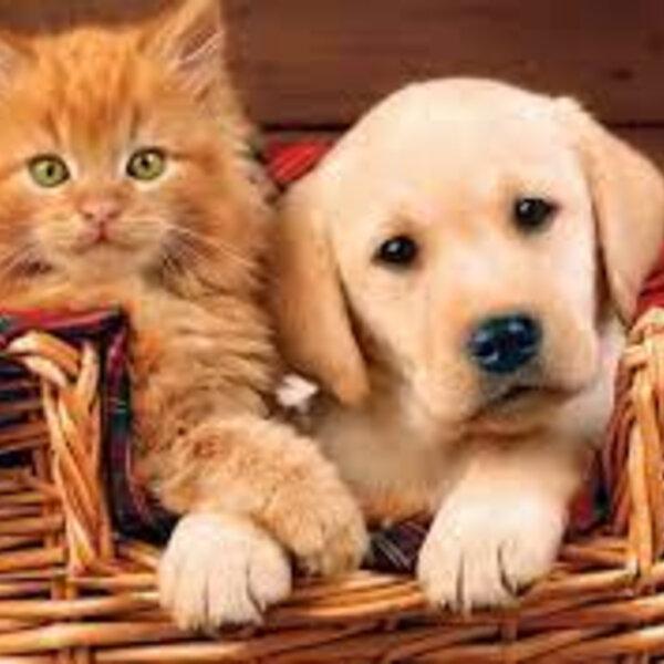 Além do vínculo afetivo com seu dono, cães e gatos precisam de quê?