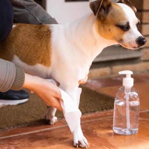 Saiba como higienizar a pata do seu cão após o passeio na rua