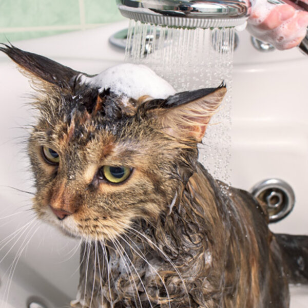 Gatos não precisam tomar banho nunca? E os cães, nos dias mais frios, como devem ser dados os banhos?