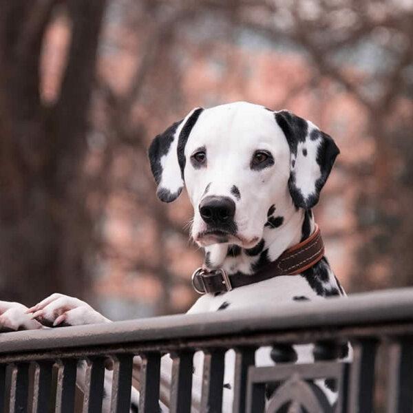 Não brigue com seu cão e entenda o porquê. Se ele tem problemas comportamentais, converse com seu veterinário