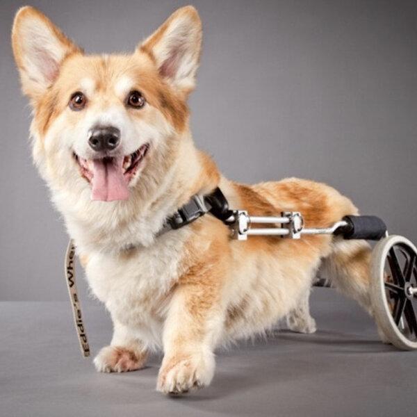 Carrinho de adaptação para animais com deficiência