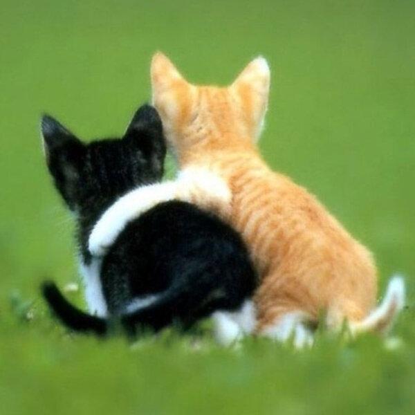 Você já escutou falar na expressão cat-lover ou dog-lover?