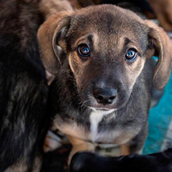 Se você ofereceu um lar seguro a um animal abandonado durante o isolamento social, não o abandone na primeira dificuldade depois que a quarentena passar!