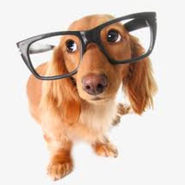 Você sabia que é mito que cães e gatos enxerguem apenas em preto e branco? Vamos tentar ver o mundo do ponto de vista deles!