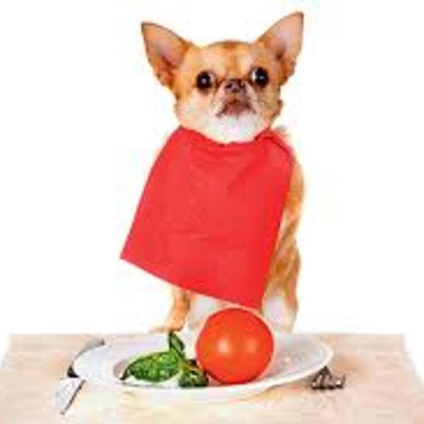 Hoje, 31 de março, é Dia da Saúde e da Nutrição. Você investe na saúde e nutrição dos seus animais?