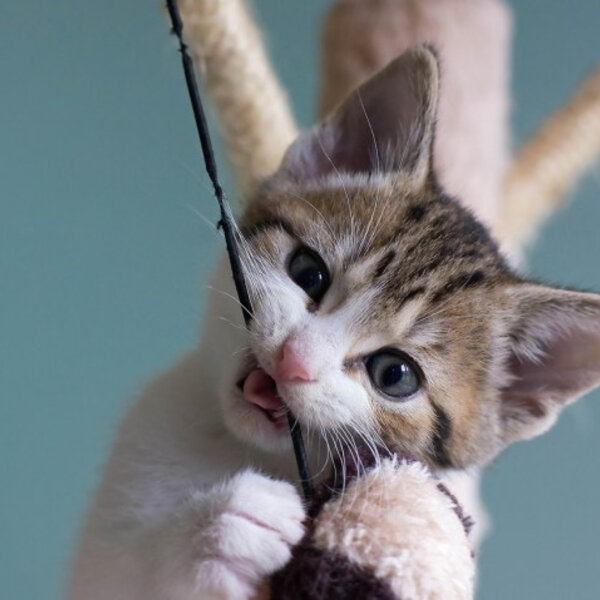Hábitos alimentares dos gatos
