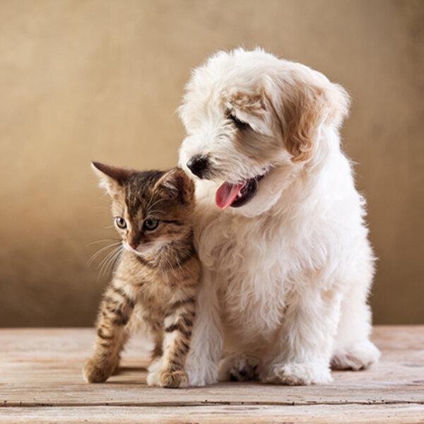 Enriquecimento ambiental felino e canino