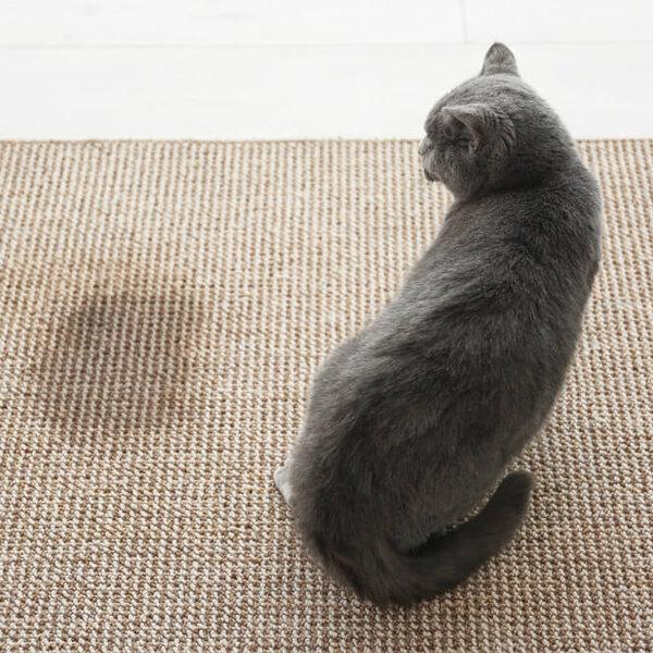 O que fazer quando os gatos da vizinhança vêm fazer xixi na minha porta?