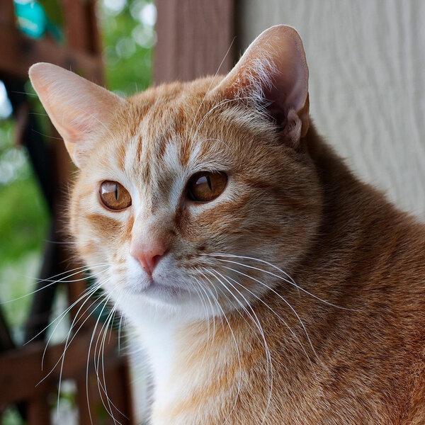 Aprenda a treinar seu gato e fazer com que ele atenda aos seus chamados!