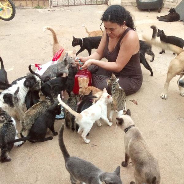 """No Dia do Voluntariado, um """"viva"""" para quem ajuda no resgate de animais abandonados, aos que procuram ONGs para doar seu tempo ou oferecem um lar temporário a cães e gatos!"""