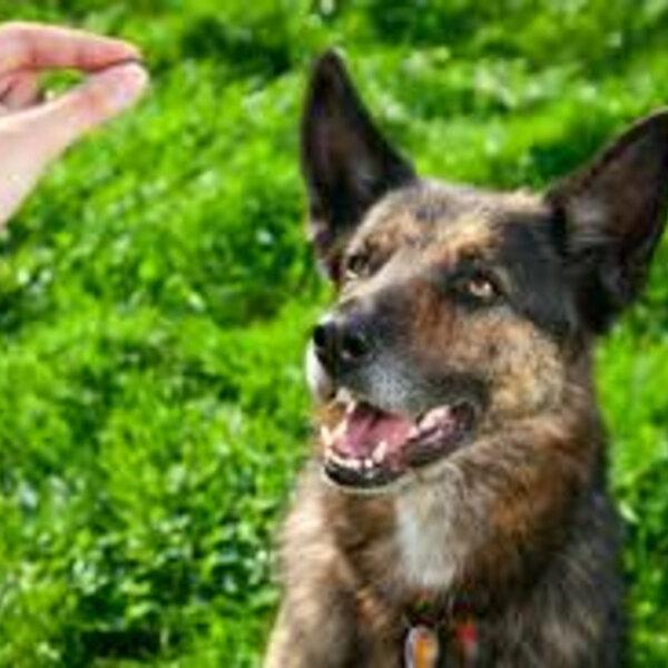 Adestre seu cachorro por reforço positivo, e não por punição