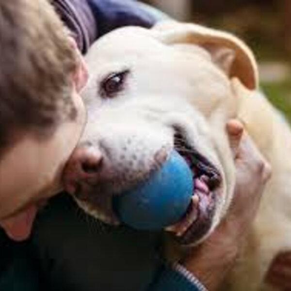 Observe os hábitos do seu animal e proporcione uma melhor qualidade de vida a ele