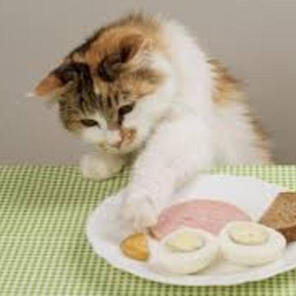 Podemos oferecer alimentos humanos para os cães e gatos?