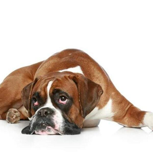 Como saber se uma lesão na pele do seu pet merece um cuidado maior