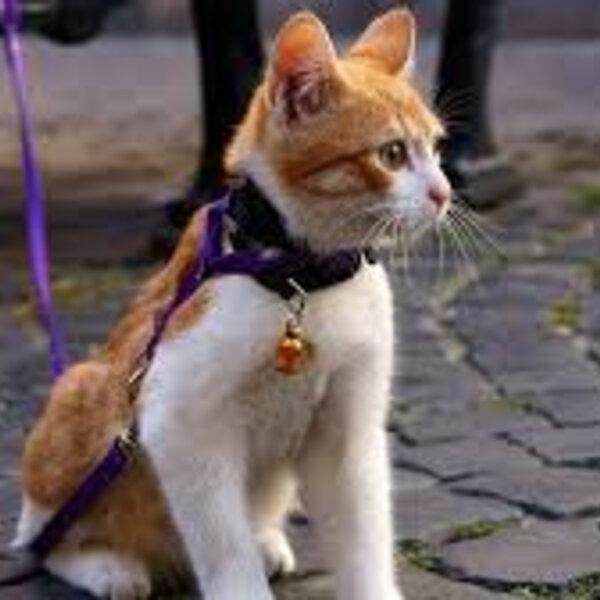 A sensibilidade tátil dos gatos