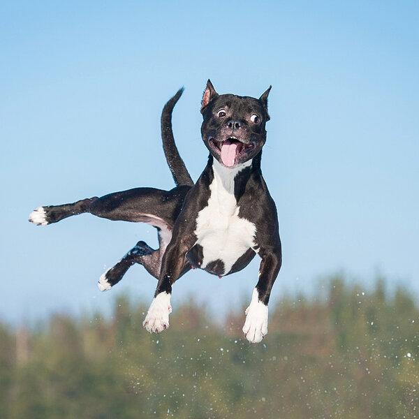 Você sabe o que significam aqueles momentos repentinos de euforia do seu cachorro, quando ele corre de um lado para o outro sem parar, especialmente quando ainda é filhote?