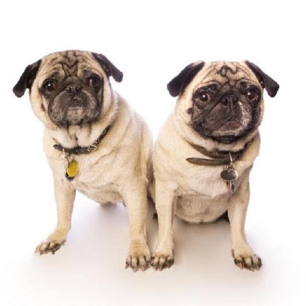 Você sabia que os pets devem ter uma identificação na sua coleira?