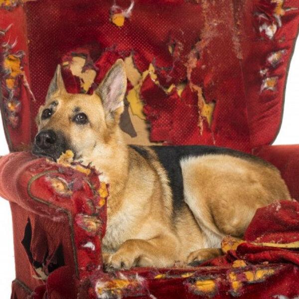 Identifique as alterações comportamentais do seu animal e dê o tratamento adequado