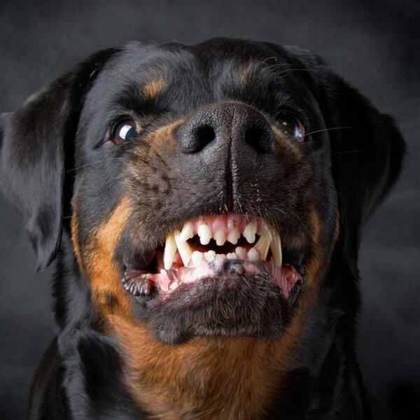 Você sabia que existem várias causas para a agressividade canina?