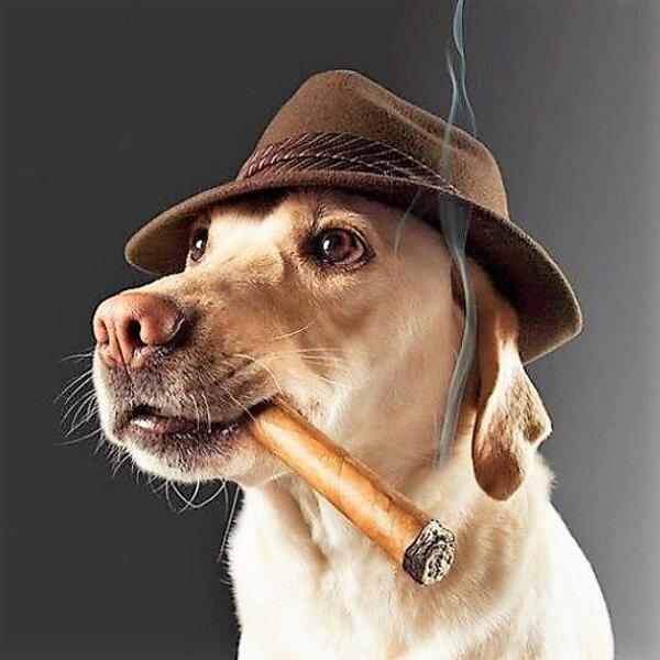 Hoje, 31 de maio, é o Dia Mundial Sem Tabaco... Você sabia que cães e gatos sofrem com a fumaça do cigarro, assim como os fumantes passivos?