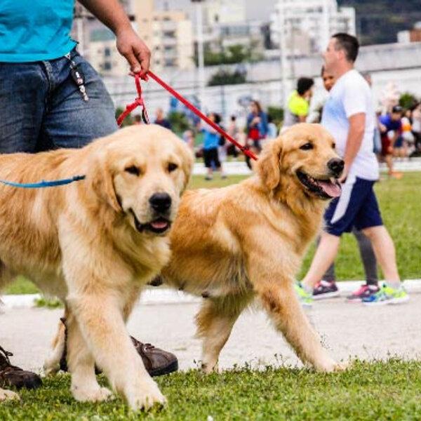 A socialização dos cães