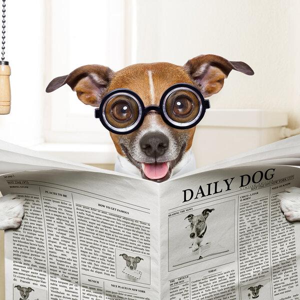 Com medo da pandemia, você quer mudar os hábitos do seu cachorro, que sempre fez as necessidades fisiológicas na rua? Siga essas dicas!