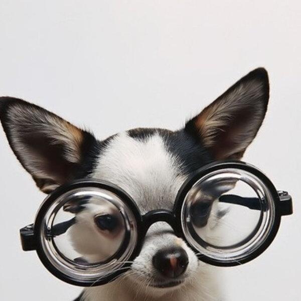 Seu pet tem alguma dificuldade sensorial? Ofereça uma melhor qualidade de vida a ele!