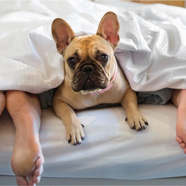 É saudável dormir com o animal de estimação na sua cama?