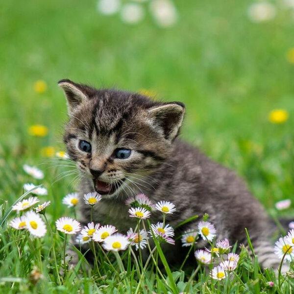 Você sabia que a primavera pode propiciar um aumento nos casos de alergia do seu pet?