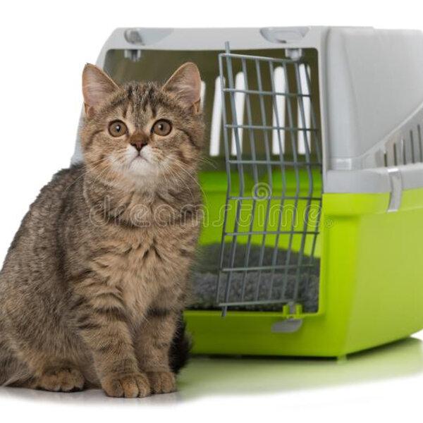 Que tal deixar a caixa de transporte do seu gato aberta, para que ele se habitue a essa