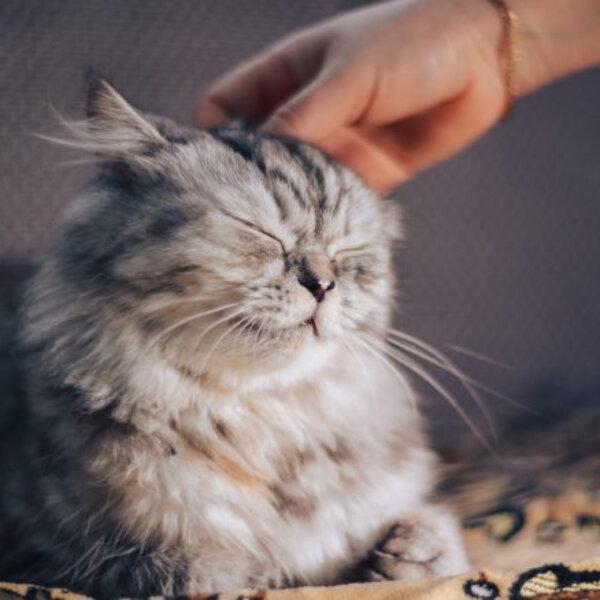 Como se aproximar do seu animal
