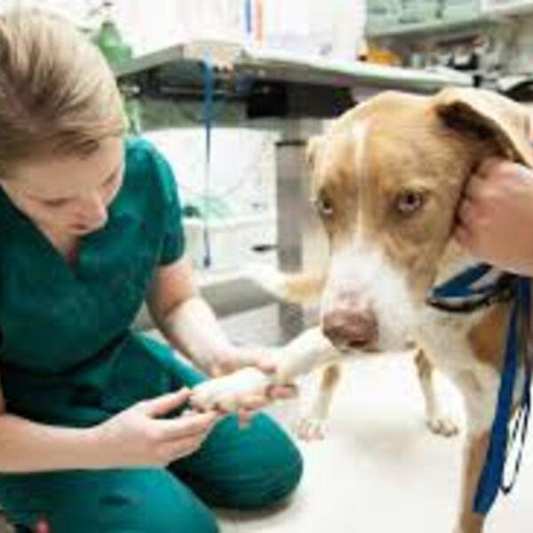 Hoje é Dia Mundial da Fisioterapia.Parabéns aos fisioterapeutas humanos e veterinários, que ajudam na reabilitação e nos tratamentos que acometem os animais!