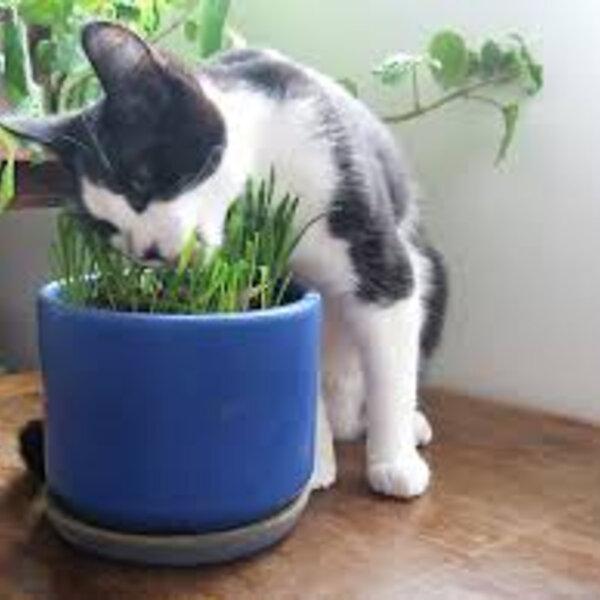 Seu animal come planta?