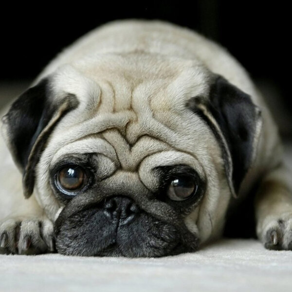 Mesmo durante a pandemia, se perceber algo de diferente com seu animal, leve-o à consulta veterinária