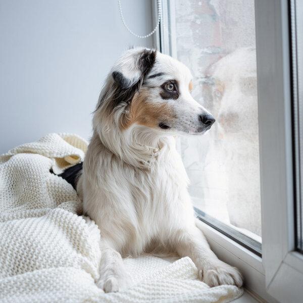 Cachorros e a ansiedade de separação: Evite festas exageradas!
