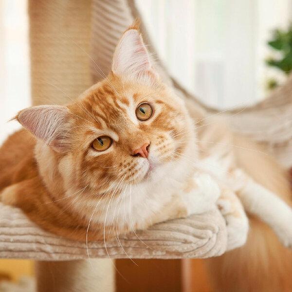 Quais as necessidades de um gato para ser feliz?