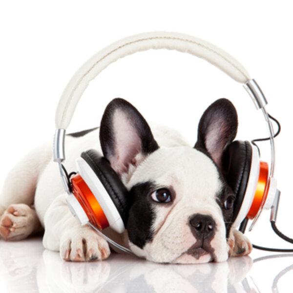 Você sabia que existe música para os cães e gatos?