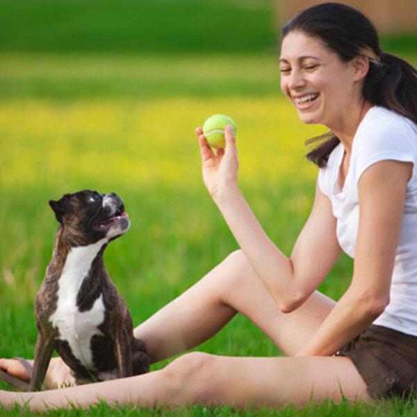 Como melhorar a convivência com os animais durante a quarentena