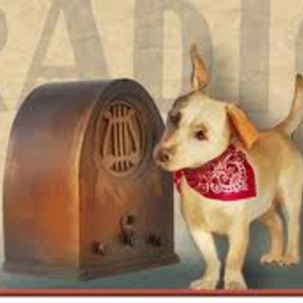 No Dia Mundial do Rádio, mande suas dúvidas sobre o mundo animal