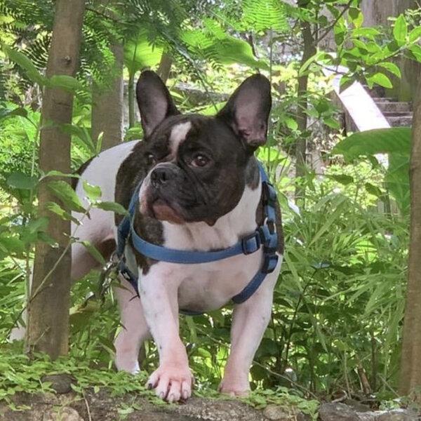 Entenda o porquê de seu animal ser mais sociável, reativo, tímido ou aventureiro...