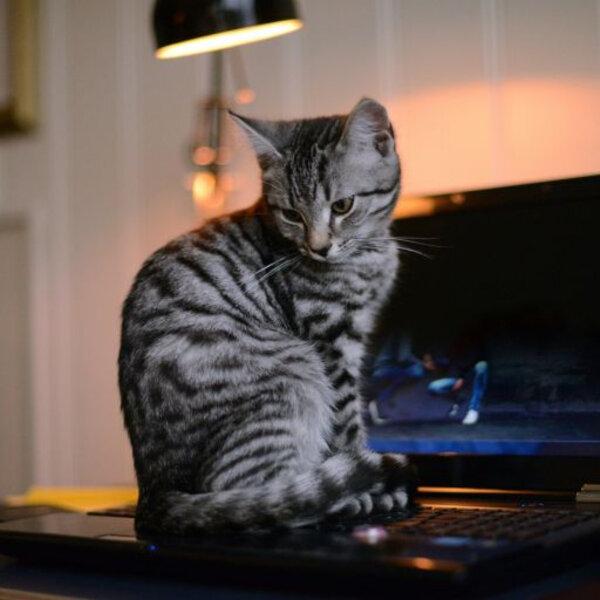 Por que os gatos adoram deitar em lugares diferentes?