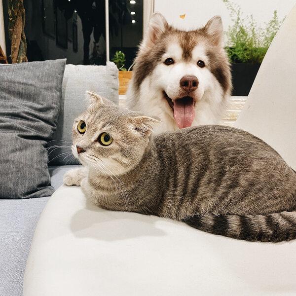 Você sabia que os pets têm personalidades diferentes?