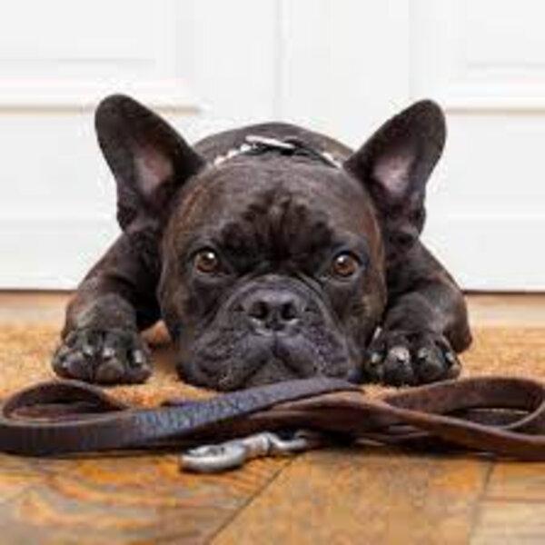 É comum que meu cachorro se sinta desconfortável quando eu coloco a coleira nele?