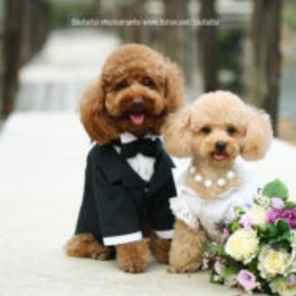 Hoje é Dia dos Namorados, mas você sabia que não há romantização quando se trata de cães e gatos?